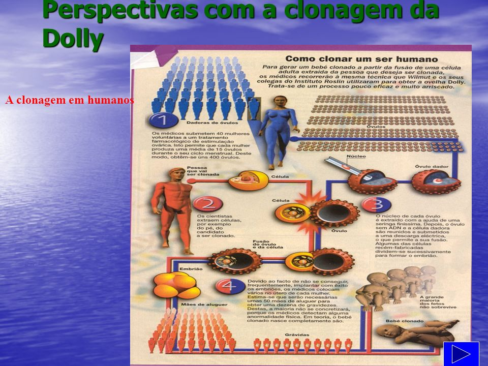 Perspectivas com a clonagem da Dolly