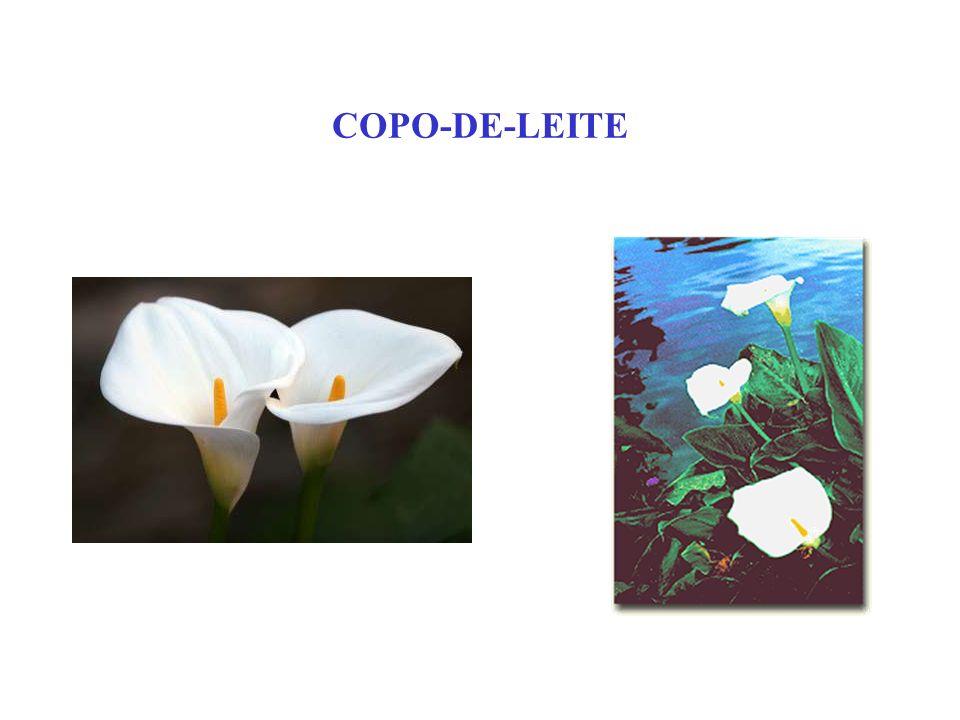 COPO-DE-LEITE