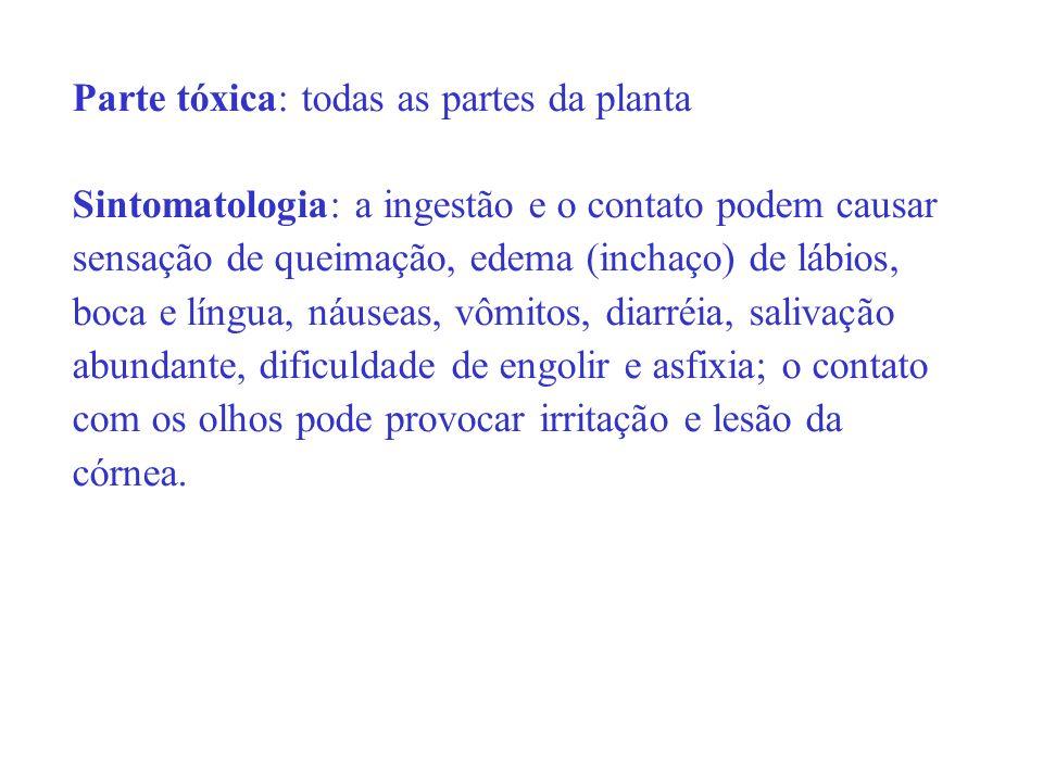 Parte tóxica: todas as partes da planta