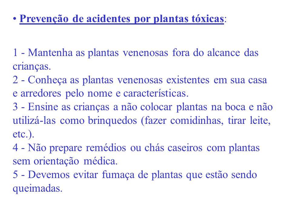 Prevenção de acidentes por plantas tóxicas:
