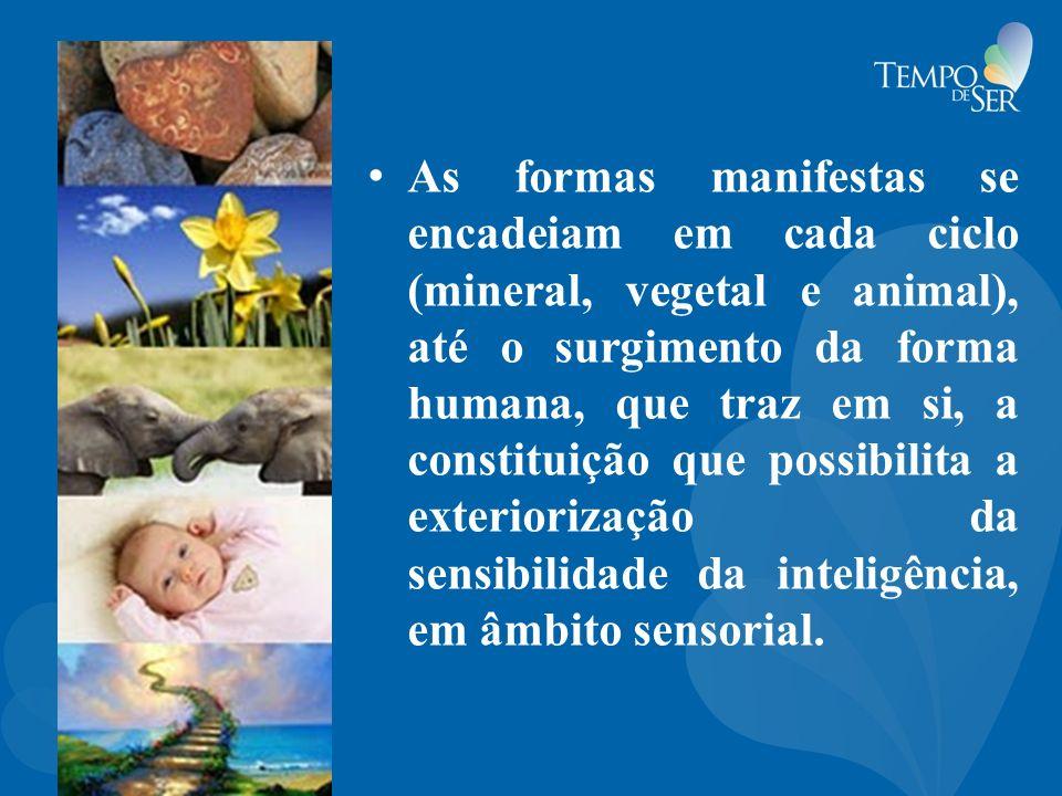 As formas manifestas se encadeiam em cada ciclo (mineral, vegetal e animal), até o surgimento da forma humana, que traz em si, a constituição que possibilita a exteriorização da sensibilidade da inteligência, em âmbito sensorial.
