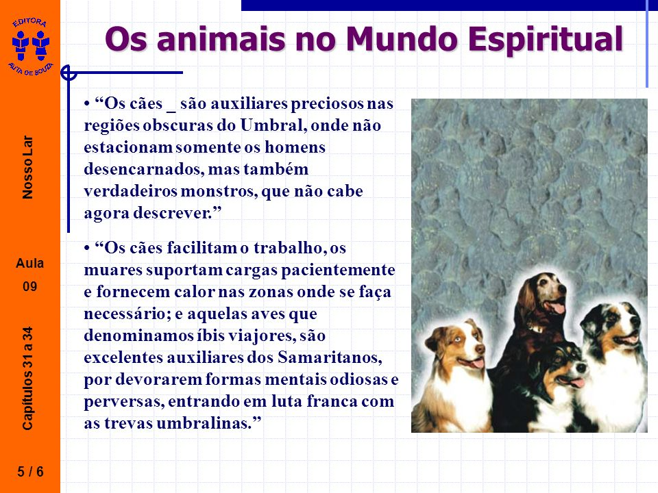 Os animais no Mundo Espiritual