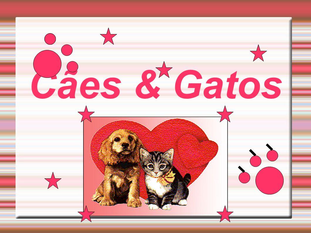 Cães & Gatos