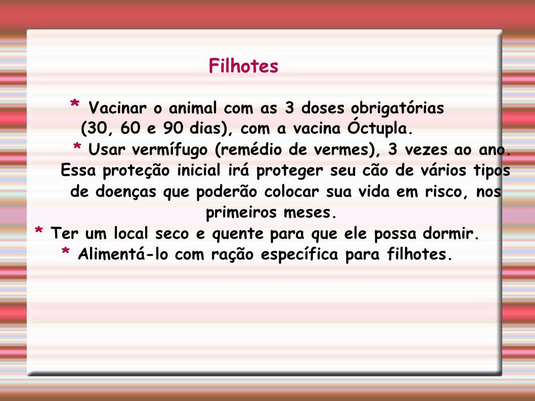 * Vacinar o animal com as 3 doses obrigatórias