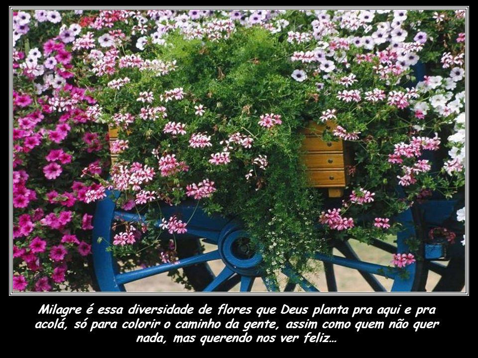 Milagre é essa diversidade de flores que Deus planta pra aqui e pra acolá, só para colorir o caminho da gente, assim como quem não quer nada, mas querendo nos ver feliz…