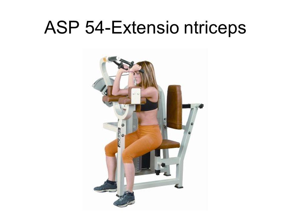 ASP 54-Extensio ntriceps
