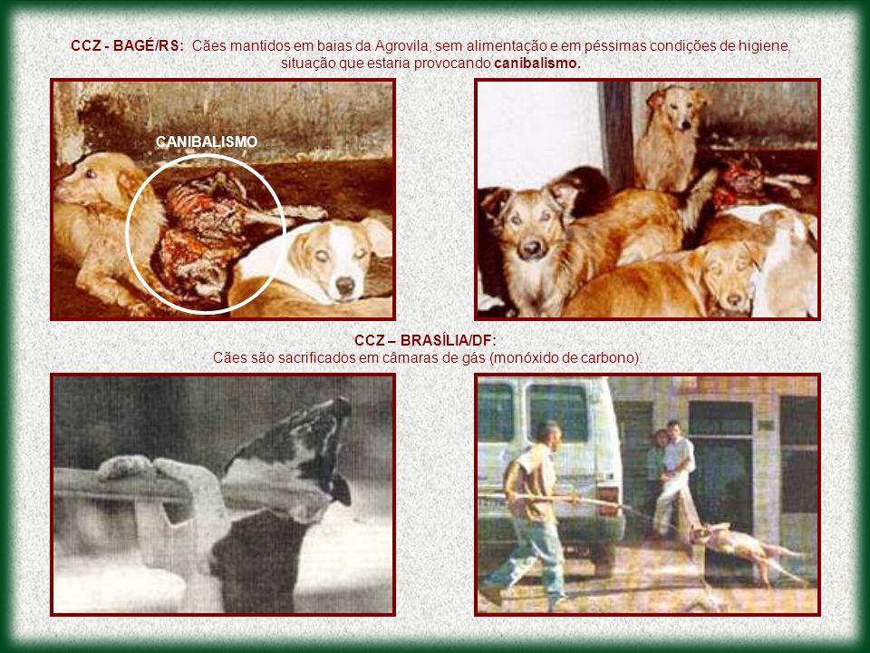 Cães são sacrificados em câmaras de gás (monóxido de carbono).