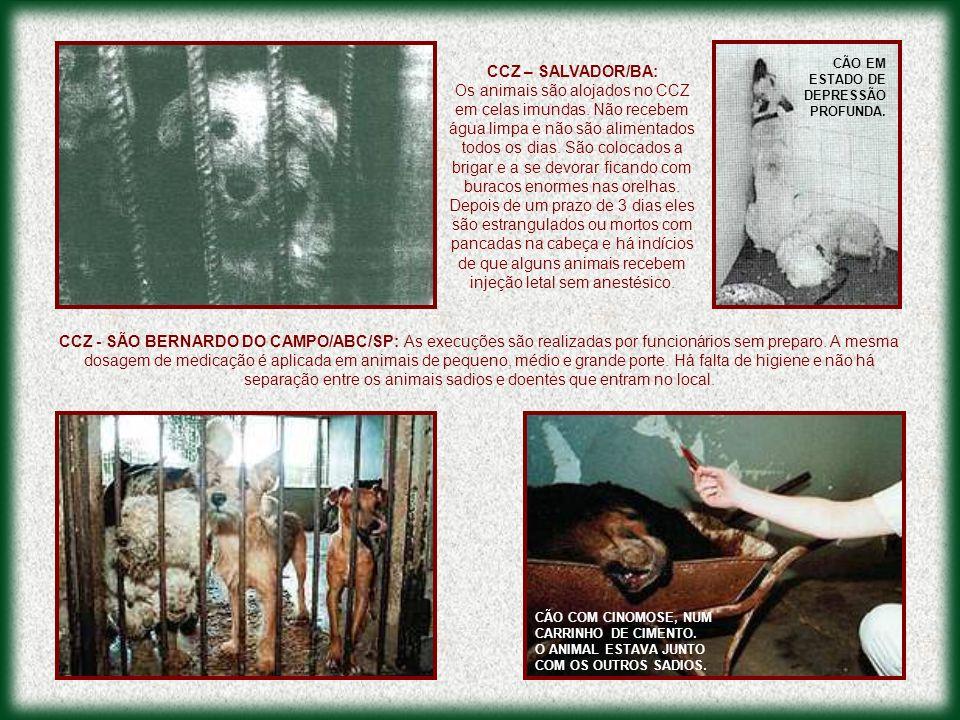 CCZ – SALVADOR/BA:
