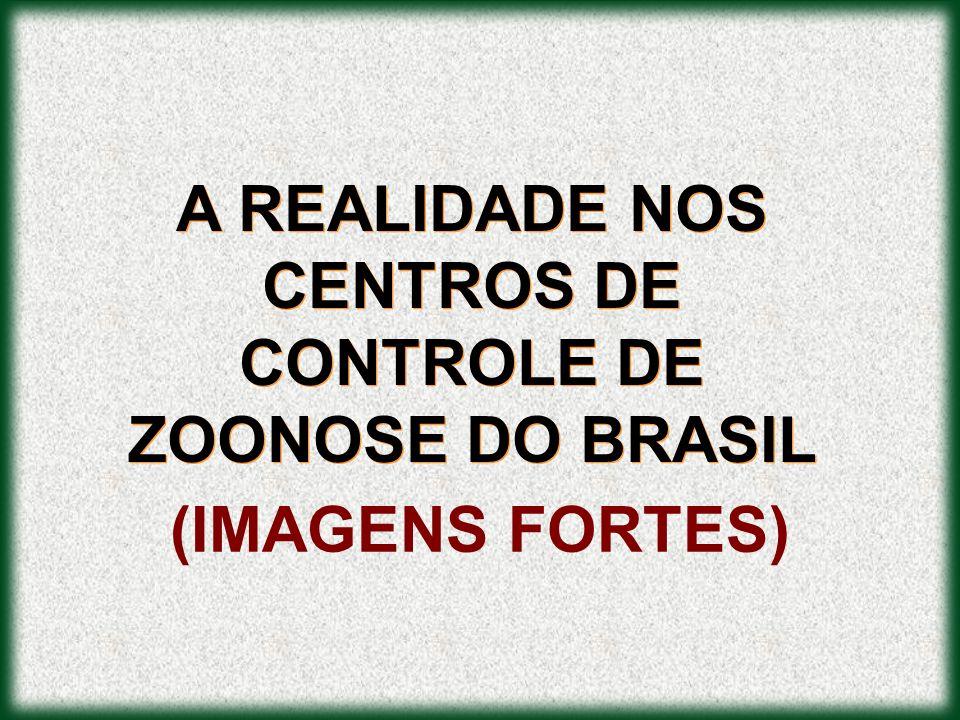 A REALIDADE NOS CENTROS DE CONTROLE DE ZOONOSE DO BRASIL