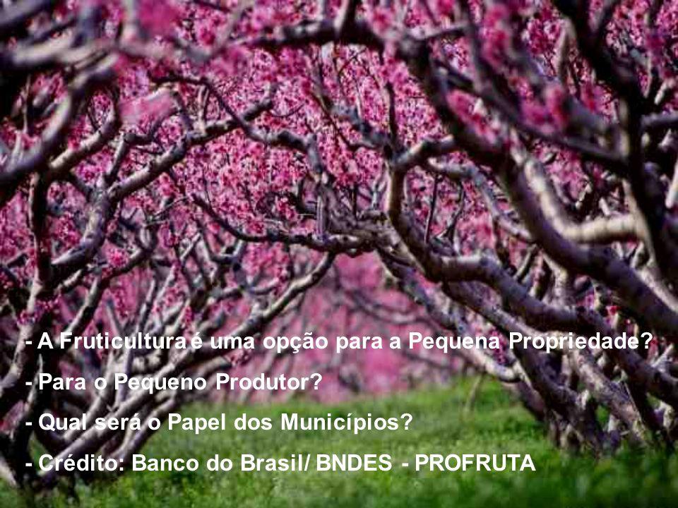 - A Fruticultura é uma opção para a Pequena Propriedade