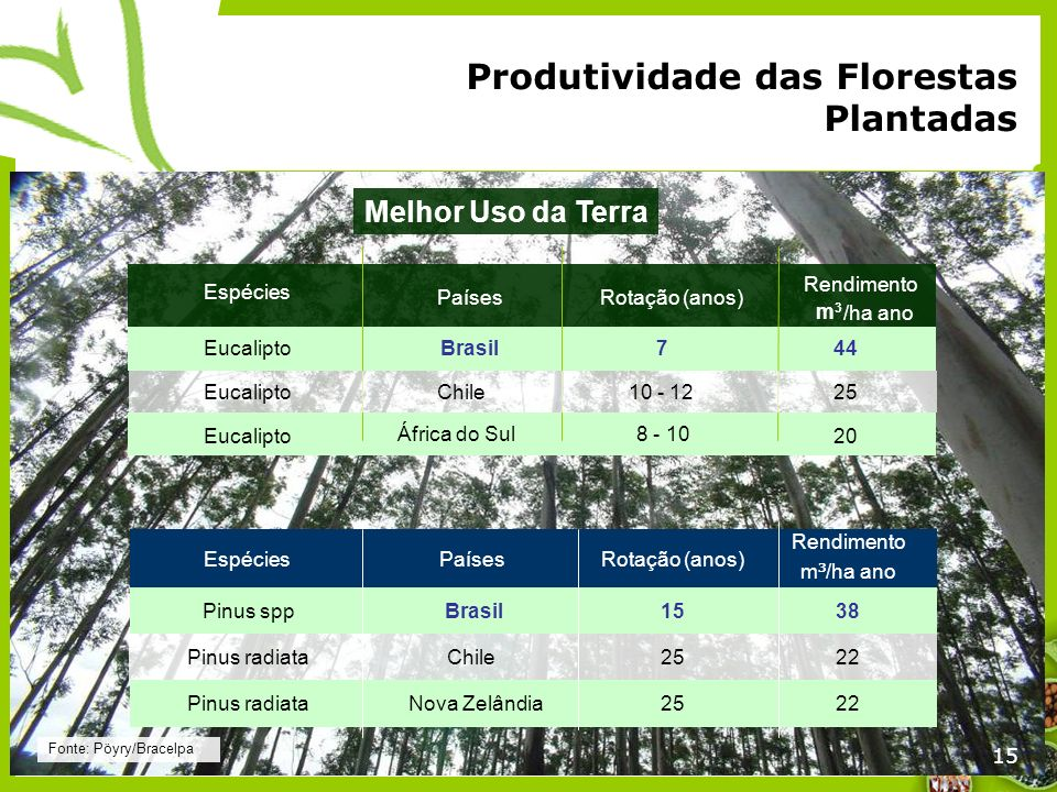 Produtividade das Florestas Plantadas