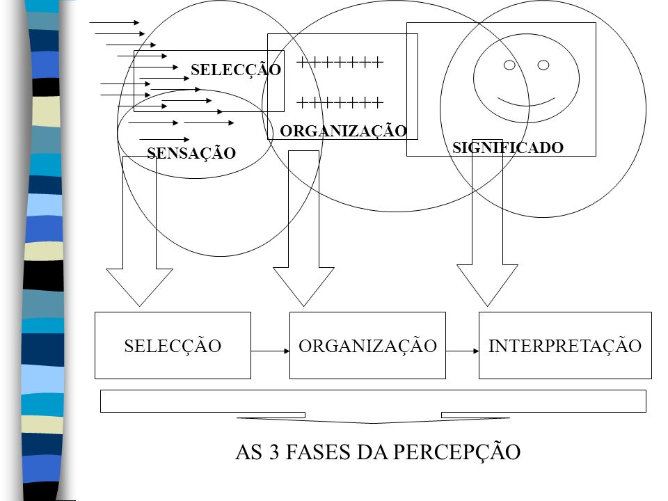 +++++++ AS 3 FASES DA PERCEPÇÃO SELECÇÃO ORGANIZAÇÃO INTERPRETAÇÃO