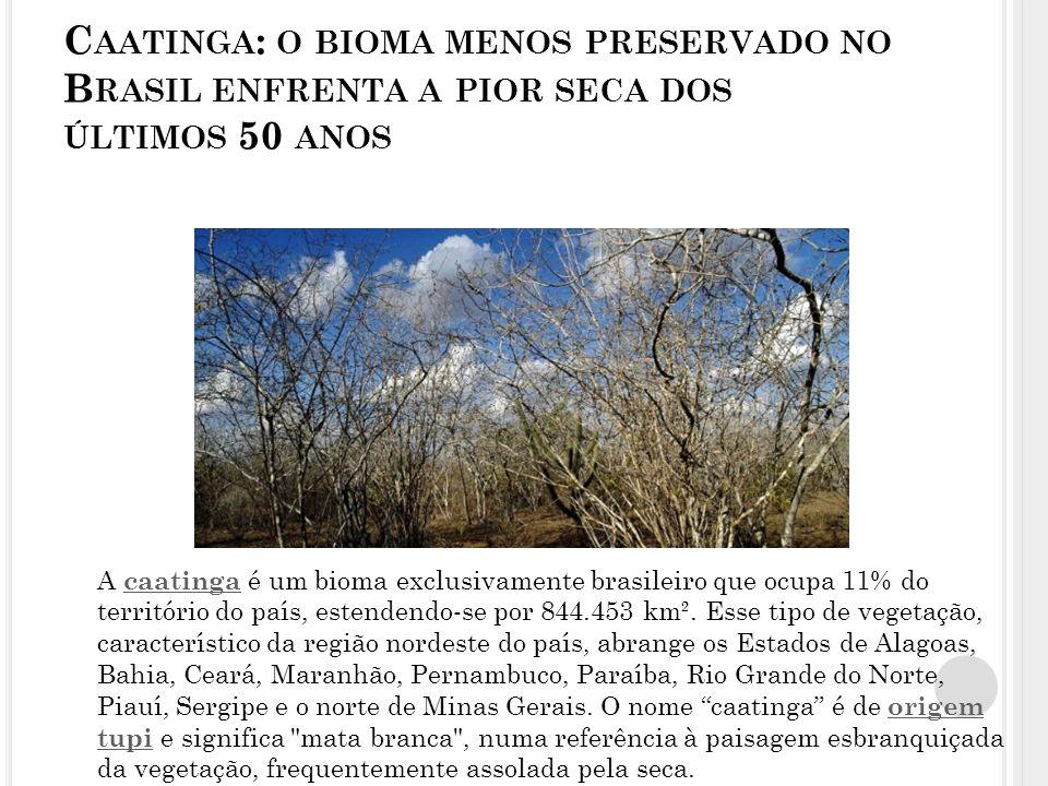 Caatinga: o bioma menos preservado no Brasil enfrenta a pior seca dos últimos 50 anos