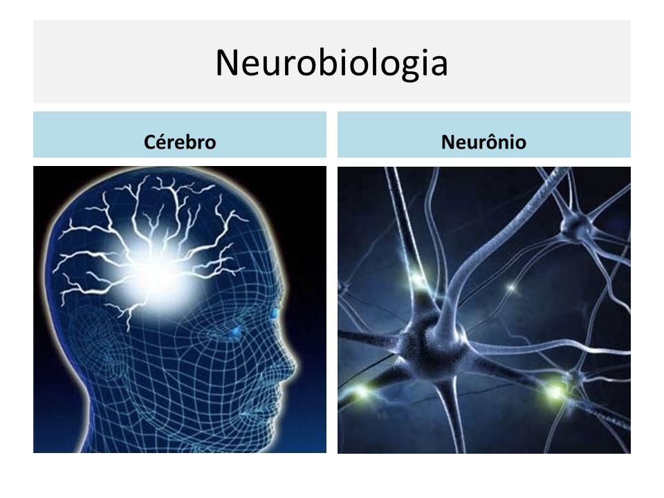 Neurobiologia Cérebro Neurônio