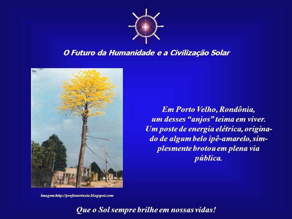 ☼ Em Porto Velho, Rondônia, um desses anjos teima em viver.