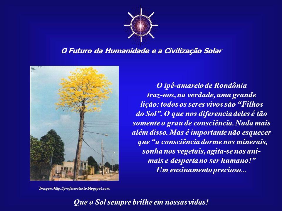 ☼ O ipê-amarelo de Rondônia traz-nos, na verdade, uma grande