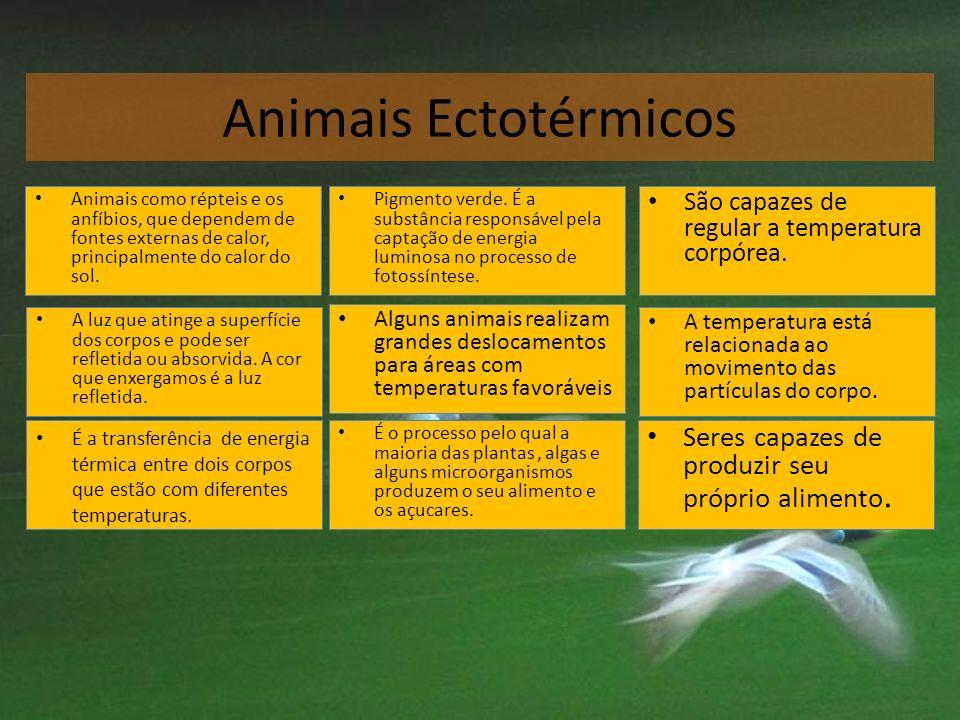 Animais Ectotérmicos Seres capazes de produzir seu próprio alimento.