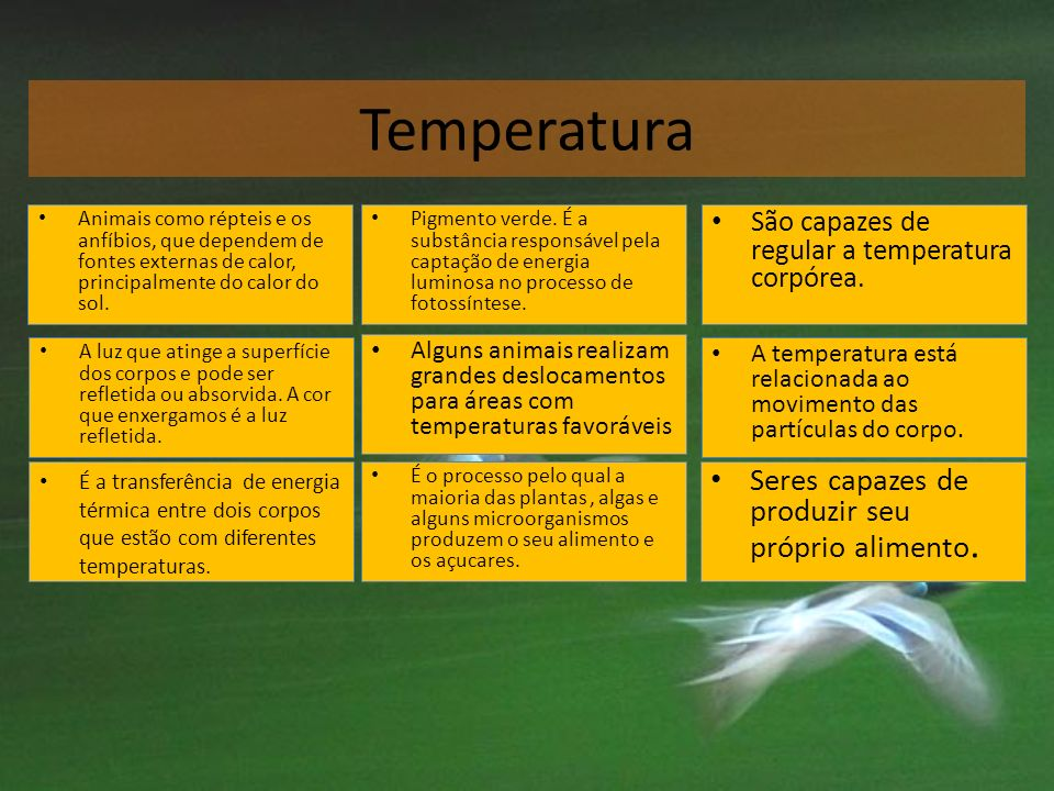 Temperatura Seres capazes de produzir seu próprio alimento.