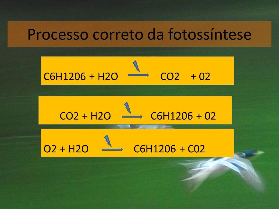 Processo correto da fotossíntese