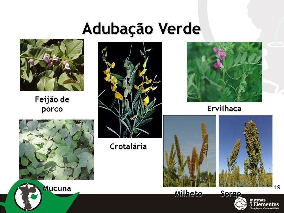 Adubação Verde Feijão de porco Ervilhaca Crotalária Mucuna Milheto