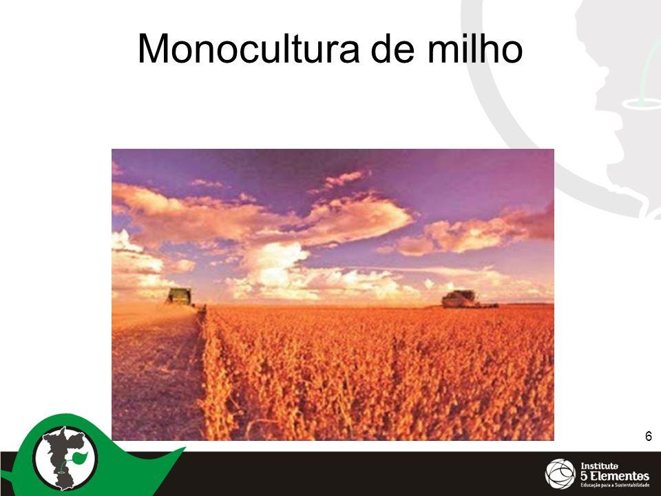 Monocultura de milho