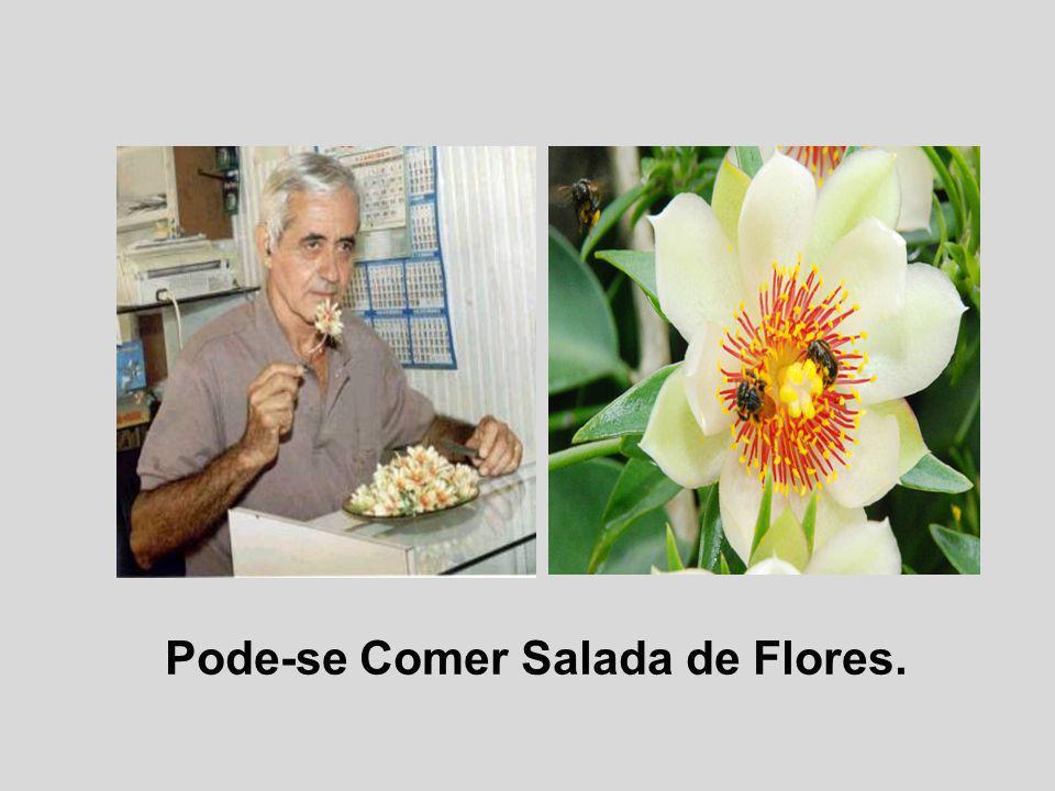 Pode-se Comer Salada de Flores.
