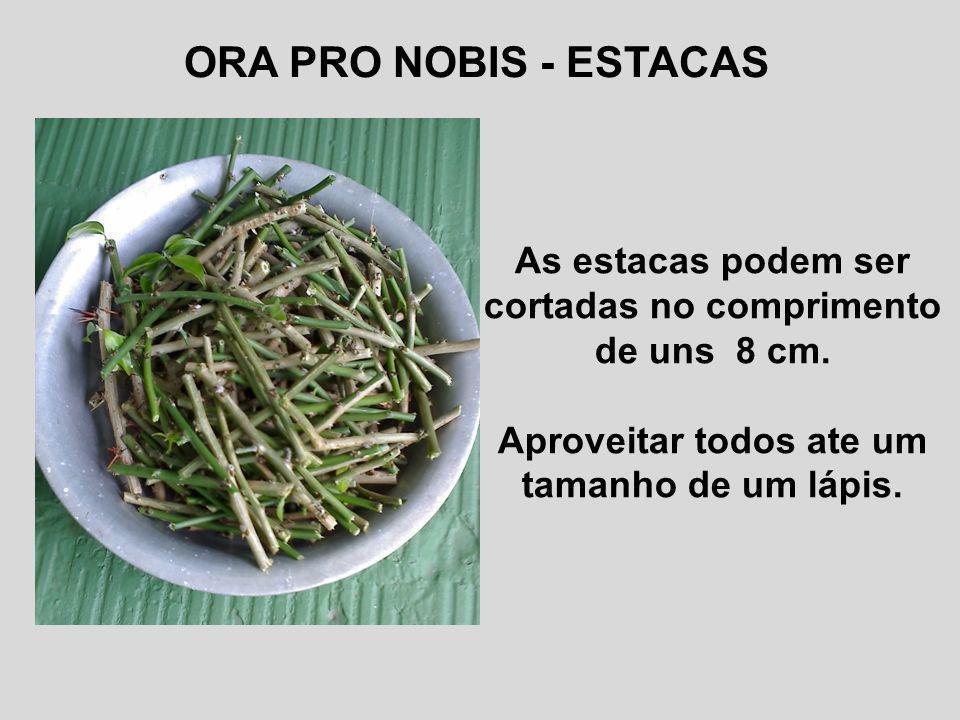 ORA PRO NOBIS - ESTACAS As estacas podem ser cortadas no comprimento de uns 8 cm.