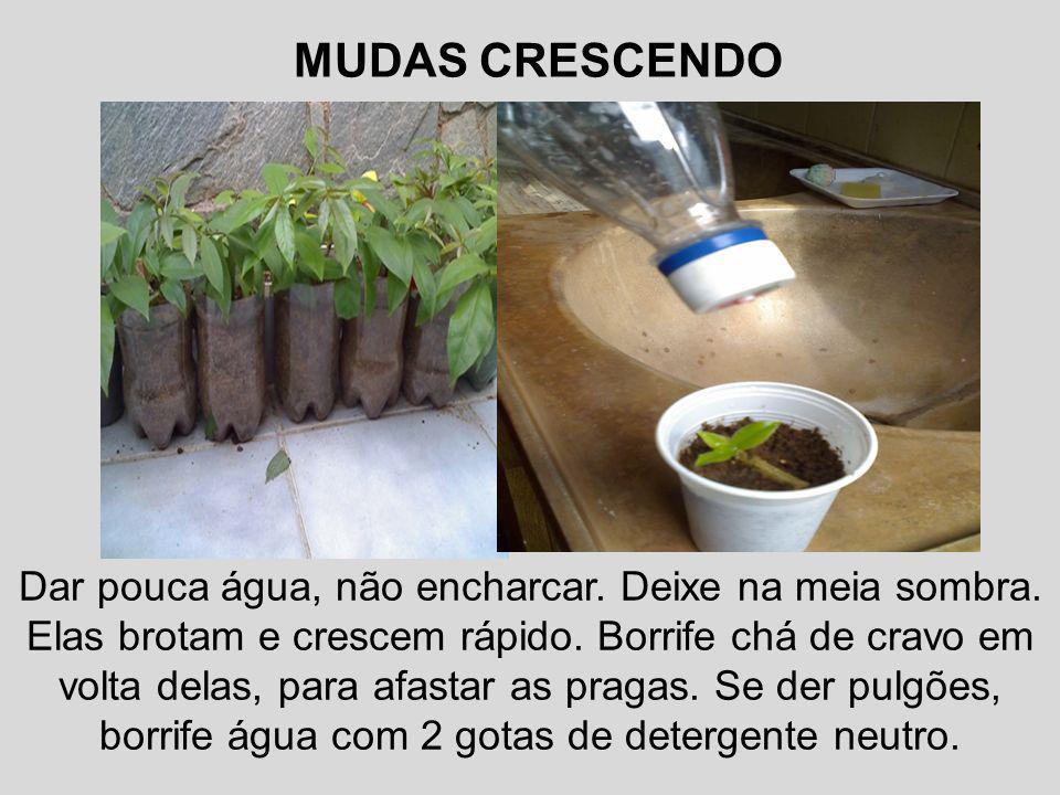 MUDAS CRESCENDO