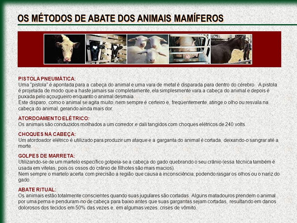 OS MÉTODOS DE ABATE DOS ANIMAIS MAMÍFEROS