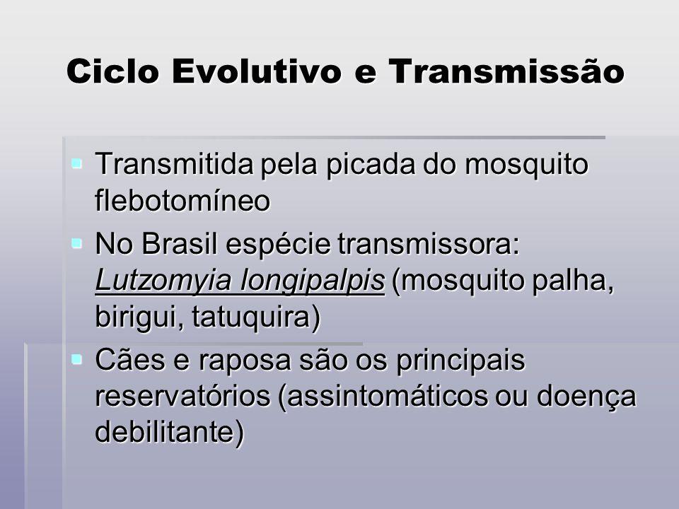 Ciclo Evolutivo e Transmissão