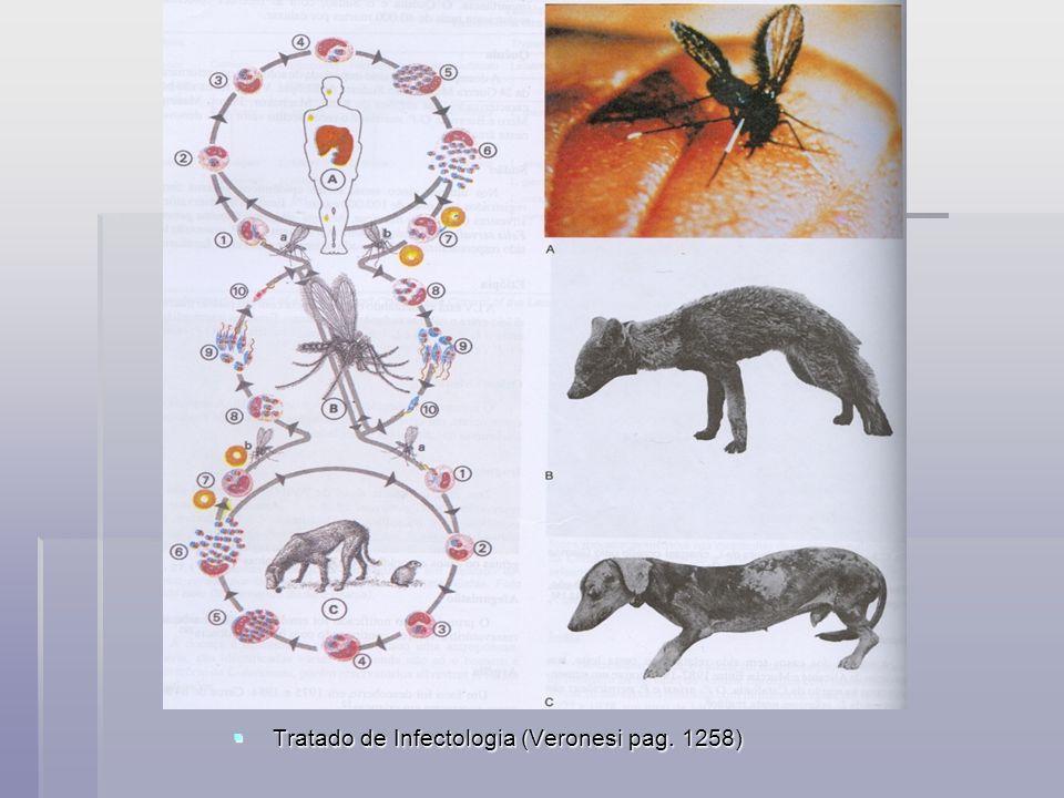Tratado de Infectologia (Veronesi pag. 1258)