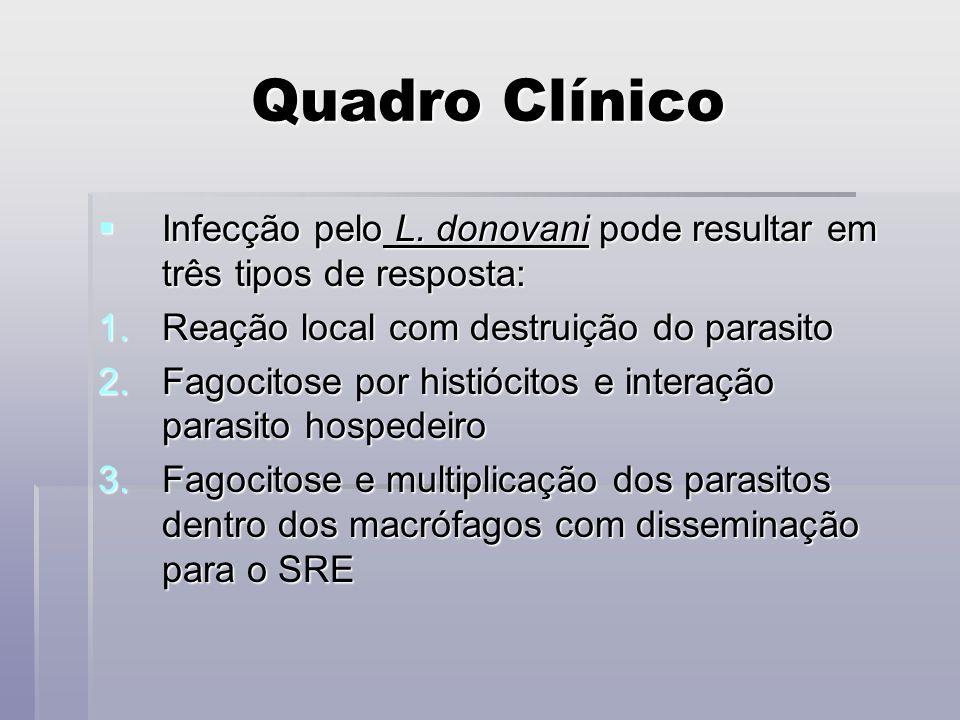 Quadro Clínico Infecção pelo L. donovani pode resultar em três tipos de resposta: Reação local com destruição do parasito.