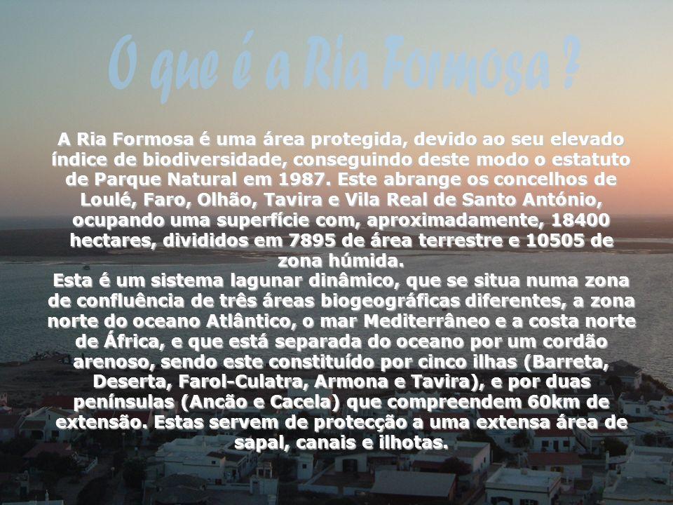 O que é a Ria Formosa
