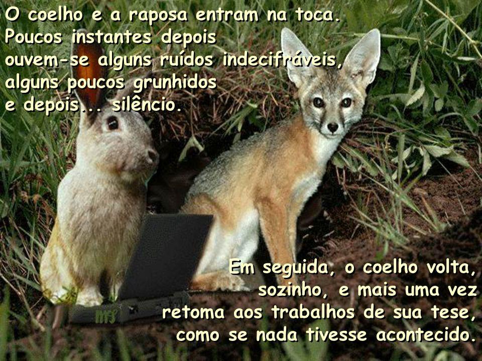 O coelho e a raposa entram na toca.