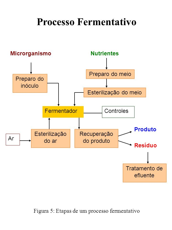 Processo Fermentativo