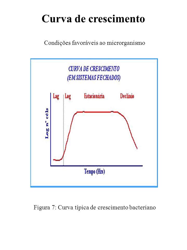 Curva de crescimento Condições favoráveis ao microrganismo