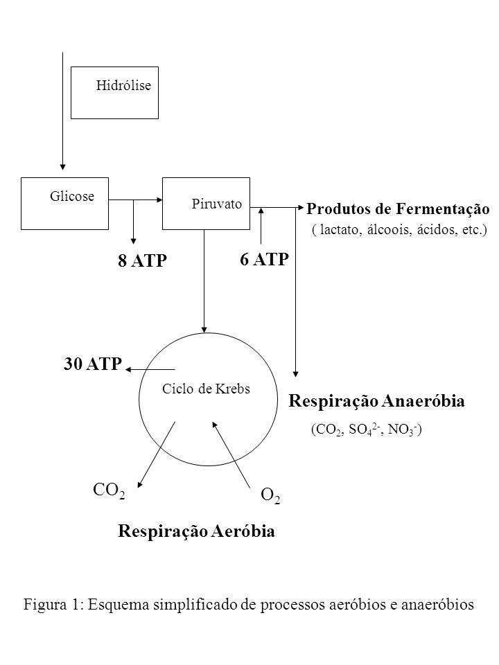 8 ATP 6 ATP 30 ATP Respiração Anaeróbia CO2 O2 Respiração Aeróbia