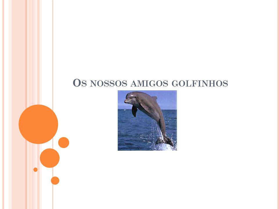 Os nossos amigos golfinhos
