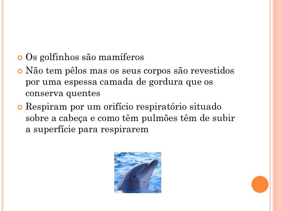 Os golfinhos são mamíferos