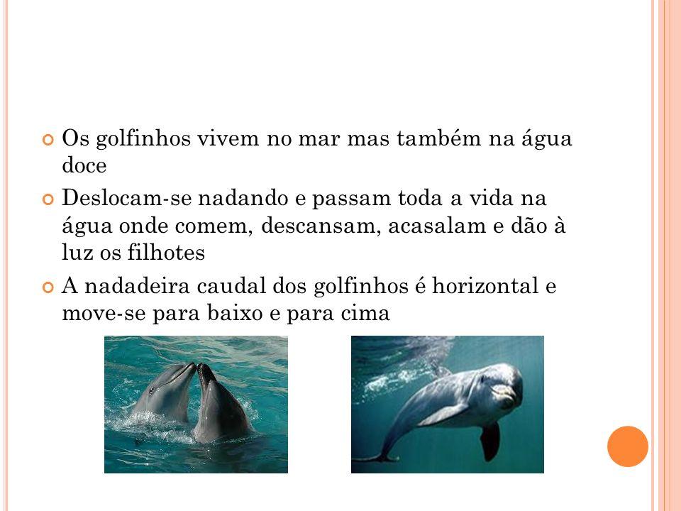 Os golfinhos vivem no mar mas também na água doce