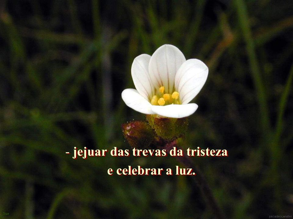 jejuar das trevas da tristeza e celebrar a luz.