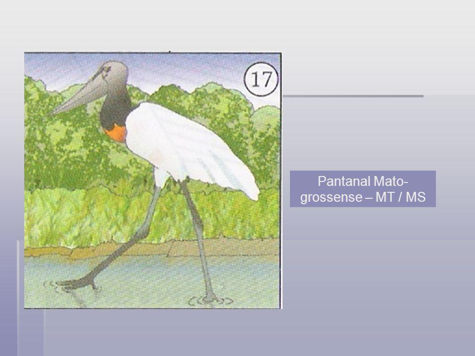 Pantanal Mato-grossense – MT / MS