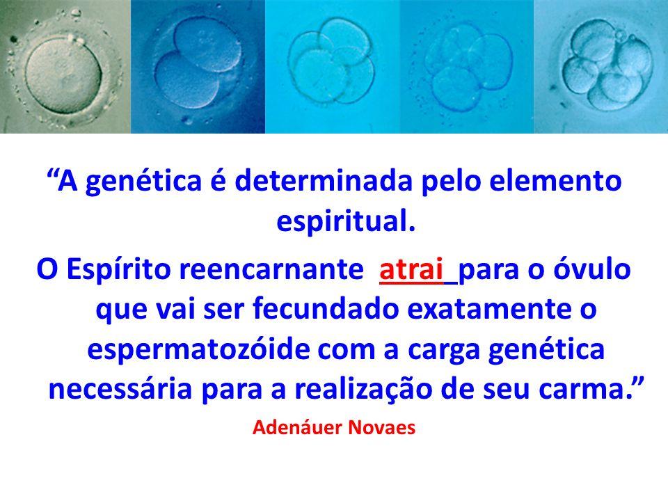 A genética é determinada pelo elemento espiritual.