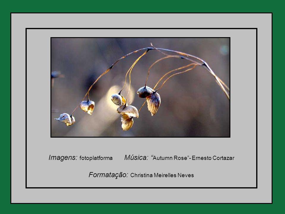 Imagens: fotoplatforma Música: Autumn Rose - Ernesto Cortazar