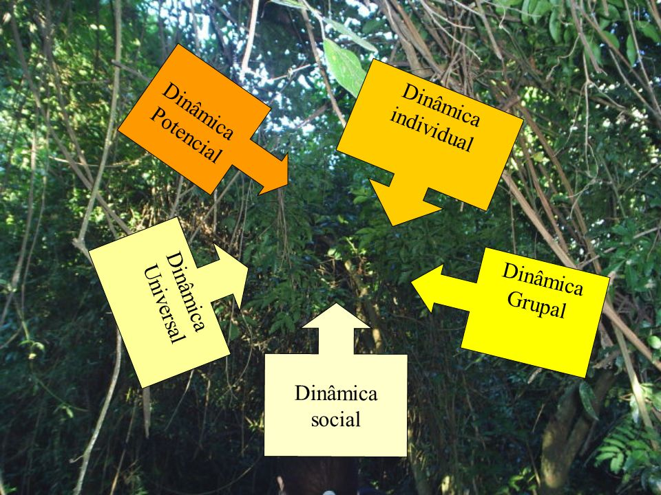 Dinâmica Potencial Dinâmica individual Dinâmica Universal Dinâmica Grupal Dinâmica social