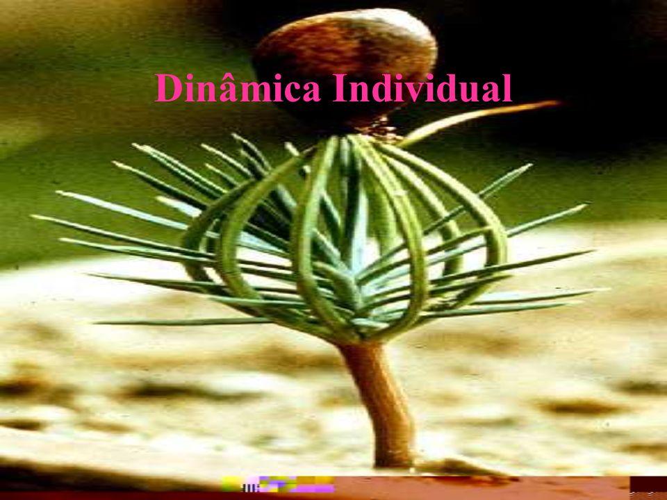 Dinâmica Individual