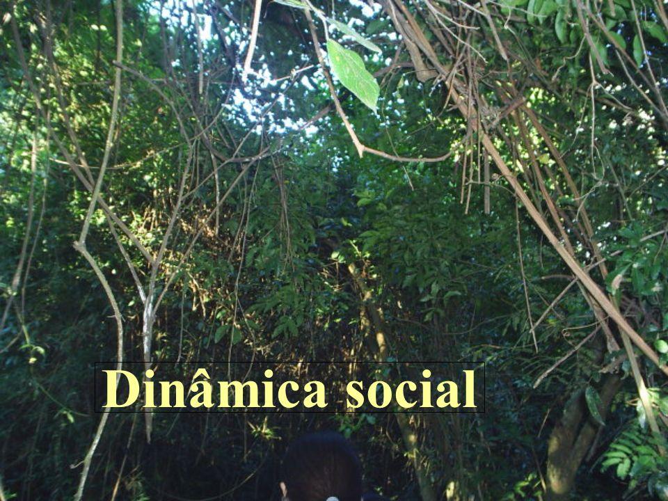 Dinâmica social