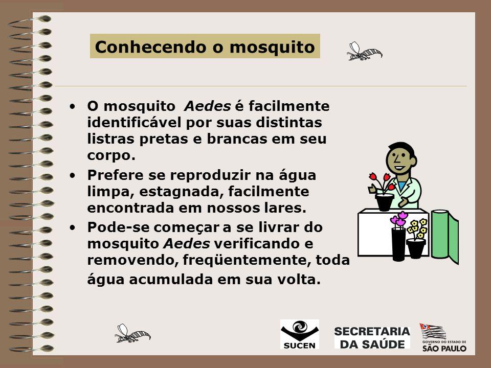 Conhecendo o mosquito O mosquito Aedes é facilmente identificável por suas distintas listras pretas e brancas em seu corpo.