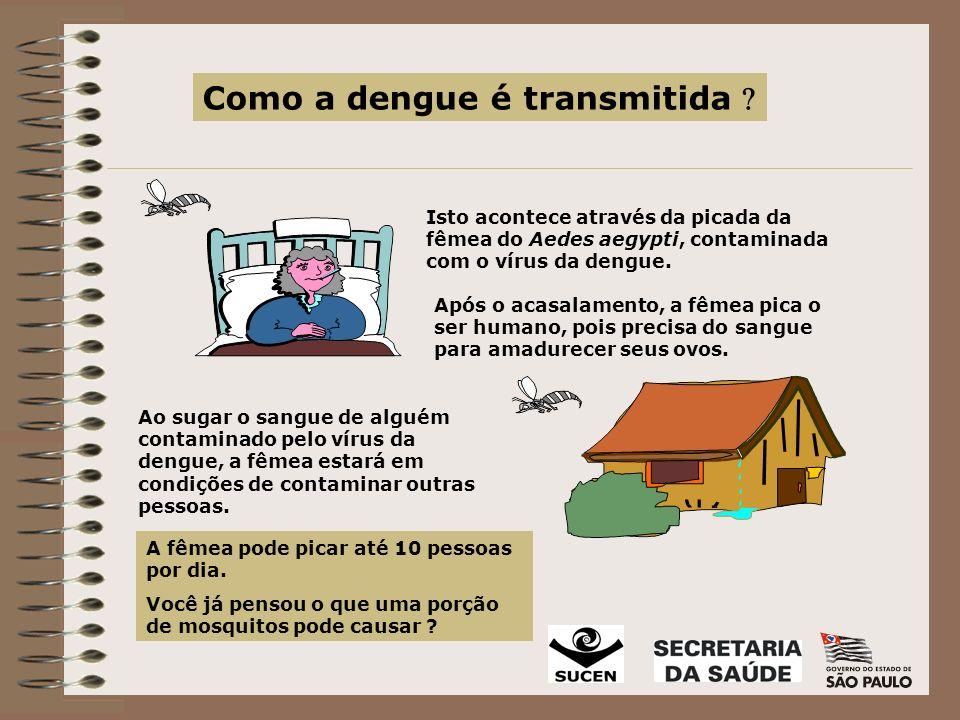 Como a dengue é transmitida 