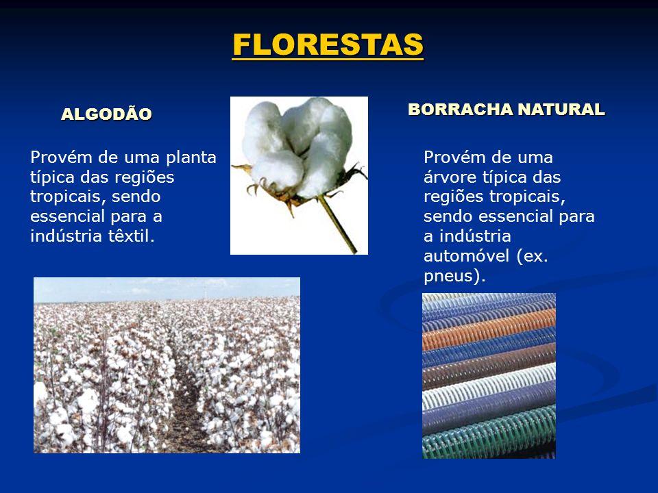 FLORESTAS BORRACHA NATURAL ALGODÃO
